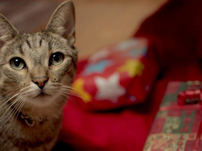 Cat-A-Claws